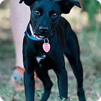 Adopt A Pet :: Deb - $125 - Seneca, SC