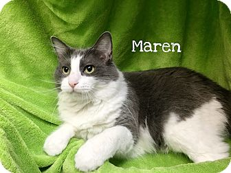 Domestic Mediumhair Cat for adoption in Foothill Ranch, California - Maren