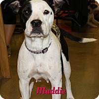 Adopt A Pet :: Maddie - Cheney, KS