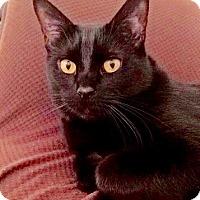 Adopt A Pet :: Claire - Colmar, PA