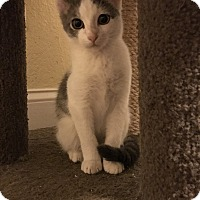 Adopt A Pet :: Deyki - Lauderhill, FL