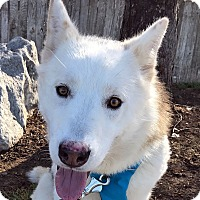 Adopt A Pet :: RIVER - Adoption Pending - Boise, ID