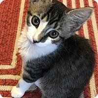 Adopt A Pet :: Leona - North Highlands, CA