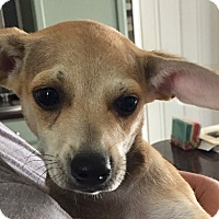 Adopt A Pet :: LITTLE LEON - Moosup, CT