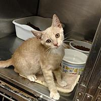 Adopt A Pet :: Tucker - Land O Lakes, FL