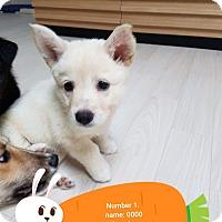 Adopt A Pet :: Thea - los angeles, CA