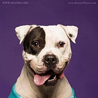 Adopt A Pet :: Jonah - Blacklick, OH