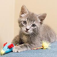 Adopt A Pet :: Arizona - Chicago, IL