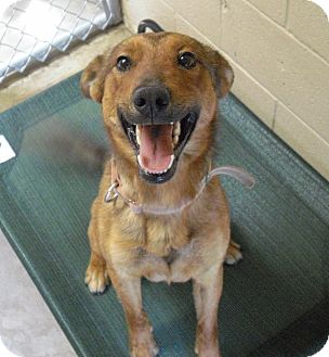 German Shepherd Dog Mix Dog for adoption in Wickenburg, Arizona - Douglas