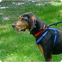Adopt A Pet :: Chappy - Waldorf, MD