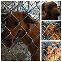 Adopt A Pet :: no name given - Donaldsonville, LA