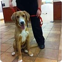 Adopt A Pet :: Karl - Alexandria, VA