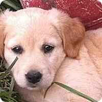 Adopt A Pet :: Athena - Lancaster, OH
