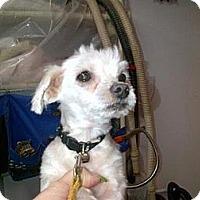 Adopt A Pet :: Ajax - Mt Gretna, PA