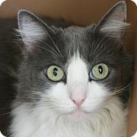 Adopt A Pet :: Lola - Canoga Park, CA