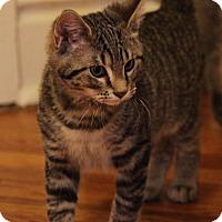 Adopt A Pet :: Calloway - St. Louis, MO