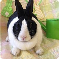 Adopt A Pet :: Misha - Paramount, CA