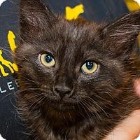 Adopt A Pet :: Prince - Irvine, CA