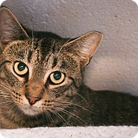 Adopt A Pet :: Dusty - Loogootee, IN