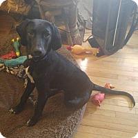 Adopt A Pet :: Riley - Treton, ON