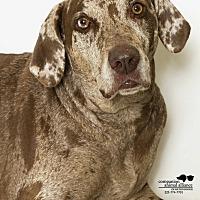 Adopt A Pet :: Houdini - Baton Rouge, LA
