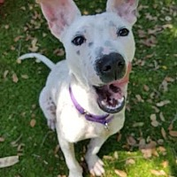 Adopt A Pet :: Shania - Fort Myers, FL