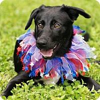 Adopt A Pet :: April - Seattle, WA