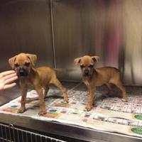 Adopt A Pet :: 36073592 - Anderson, SC
