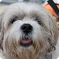 Adopt A Pet :: June Squibb - Brooklyn, NY