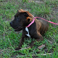 Adopt A Pet :: Mila - Maryville, IL