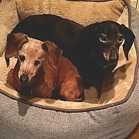 Adopt A Pet :: Lucy and Fritz - Andalusia, PA
