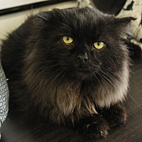 Adopt A Pet :: Mufasa - Richmond Hill, ON