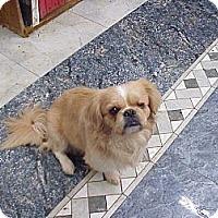 Adopt A Pet :: SPUNKY - Cathedral City, CA