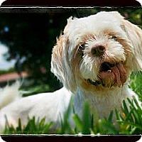 Adopt A Pet :: Murphy - loxahatchee, FL