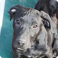 Adopt A Pet :: Chevy - PENDING, in ME - kennebunkport, ME