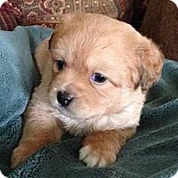 Adopt A Pet :: Reese - La Habra Heights, CA