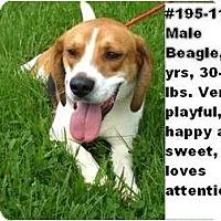 Adopt A Pet :: # 195-11 - @ANIMAL SHELTER - Zanesville, OH