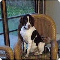 Adopt A Pet :: Roscoe - Buffalo, NY