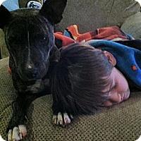 Adopt A Pet :: Pollywog the Snugglebug - Wytheville, VA