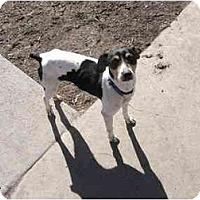 Adopt A Pet :: Bernie - Wahoo, NE