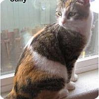 Adopt A Pet :: Sally - Portland, OR