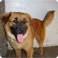 Adopt A Pet :: Caine - Winter Haven, FL