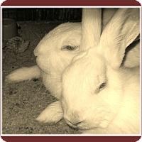 Adopt A Pet :: Stella Leigh and Weston - Williston, FL
