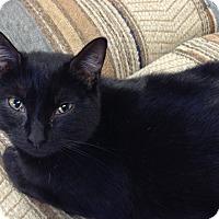 Adopt A Pet :: Monti - Newburgh, NY