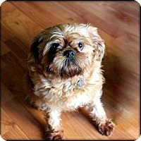 Adopt A Pet :: KEEYA - ADOPTION PENDING - Salem, OR