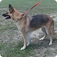 Adopt A Pet :: Cindy Jo - Orange Lake, FL