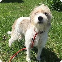 Adopt A Pet :: Dixie Ann - Russellville, KY