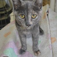 Adopt A Pet :: Tilda - East Smithfield, PA