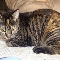 Adopt A Pet :: Merrick - Iroquois, IL