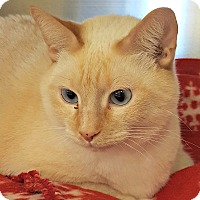 Adopt A Pet :: Hector - Chesapeake, VA